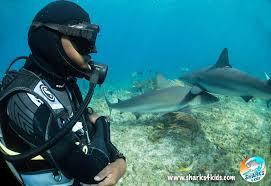 sharks 4 kids 1
